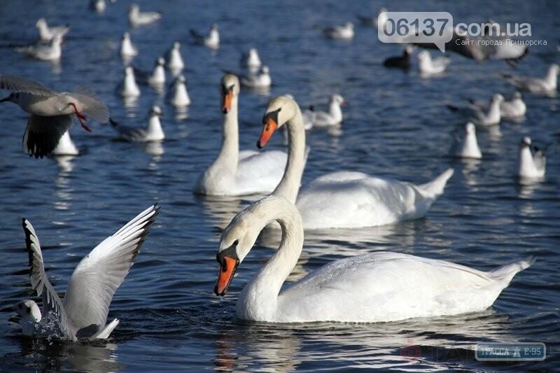 Людям потрібно повчитися відданості - у собак, теплу - у пінгвінів, а любові та вірності - у лебедів, фото-2
