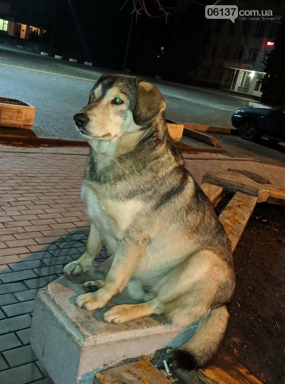 В Приморську пес Валєра на випробувальному терміні, фото-1