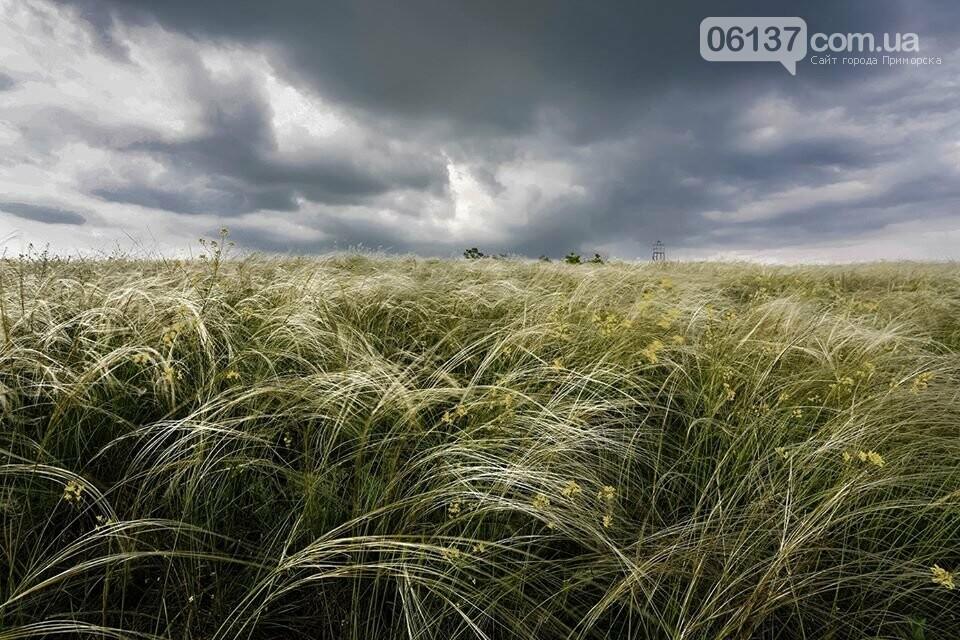 Ковыль на запорожской Хортице завораживает своей красотой. Фото, фото-1