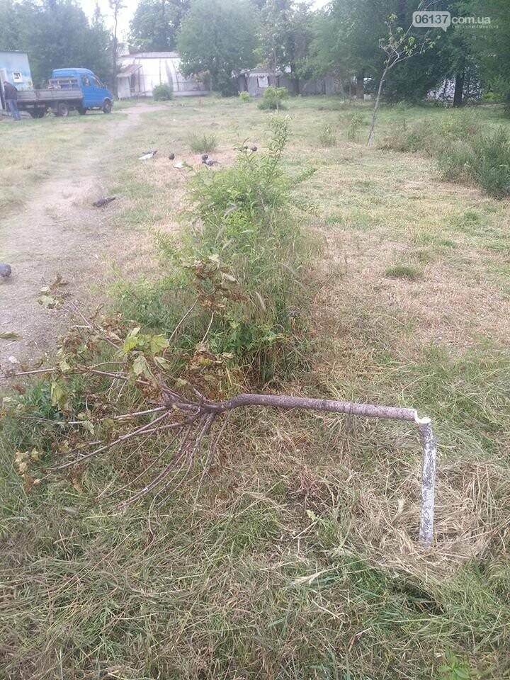 """Все труды напрасны: в запорожском сквере Яланского """"выкосили"""" молодые деревья, которые высадили активисты. Фото/Видео, фото-3"""