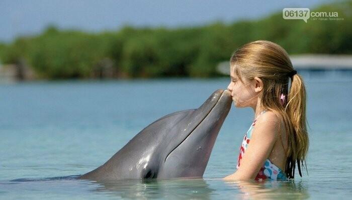 В Азовском море растет популяция дельфинов , фото-1