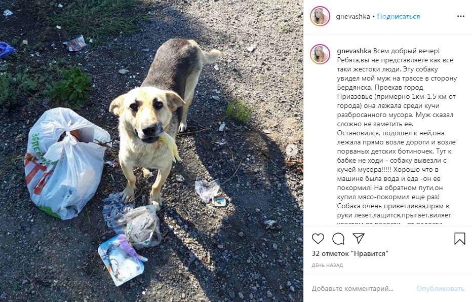 В Запорожской области собаку выбросили вместе с мусором. Фото, фото-1