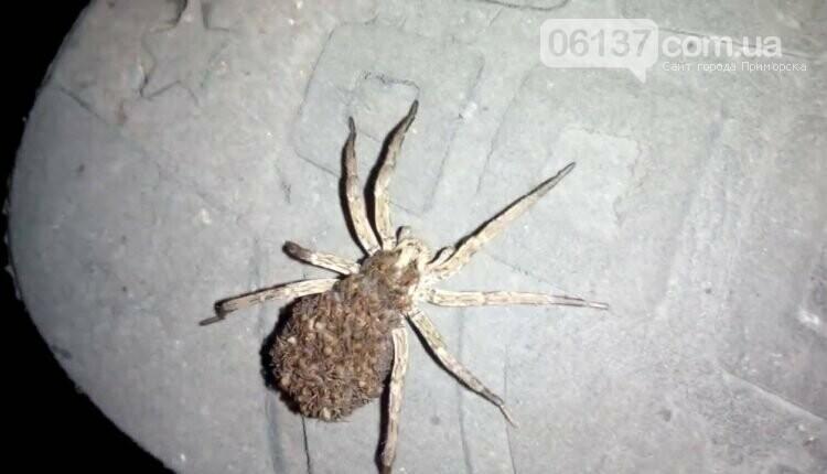 Запорожцы застали у себя дома необычного паука. Фото , фото-1