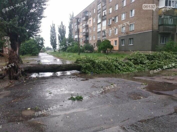 Стихия в Запорожской области вырывала деревья с корнями. Фото, фото-1