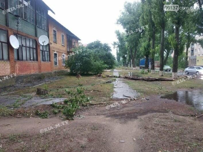 Стихия в Запорожской области вырывала деревья с корнями. Фото, фото-2