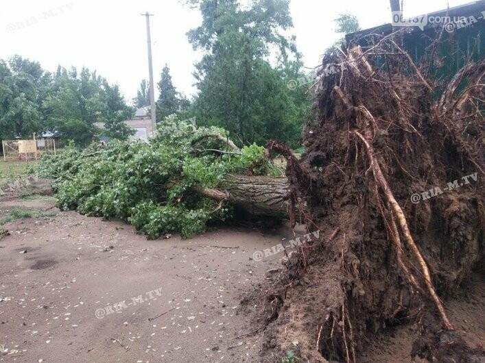 Стихия в Запорожской области вырывала деревья с корнями. Фото, фото-3