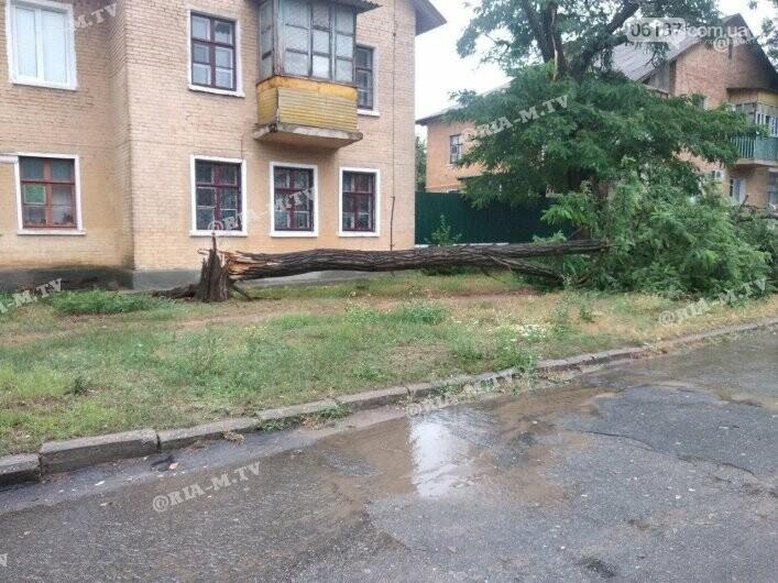 Стихия в Запорожской области вырывала деревья с корнями. Фото, фото-4