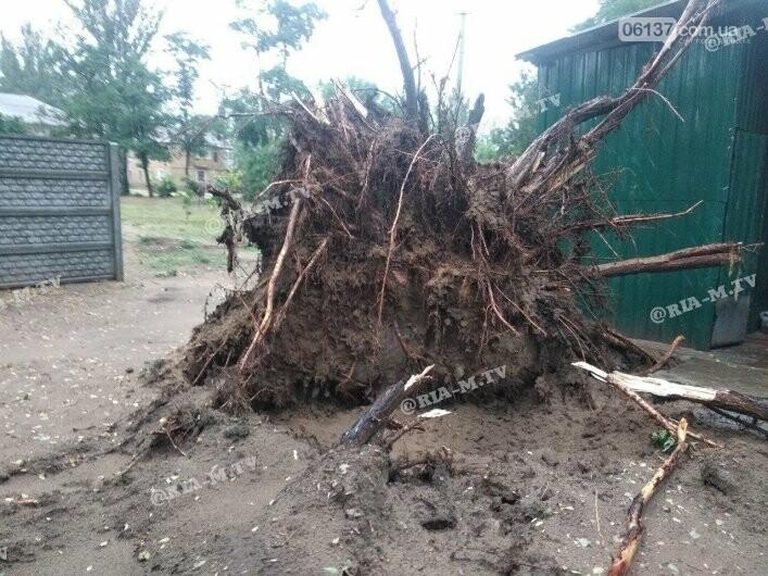Стихия в Запорожской области вырывала деревья с корнями. Фото, фото-5