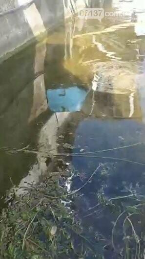 В Запорожские кафе сливают канализационные соки прямо в Днепр на Центральный пляж. Видео , фото-1