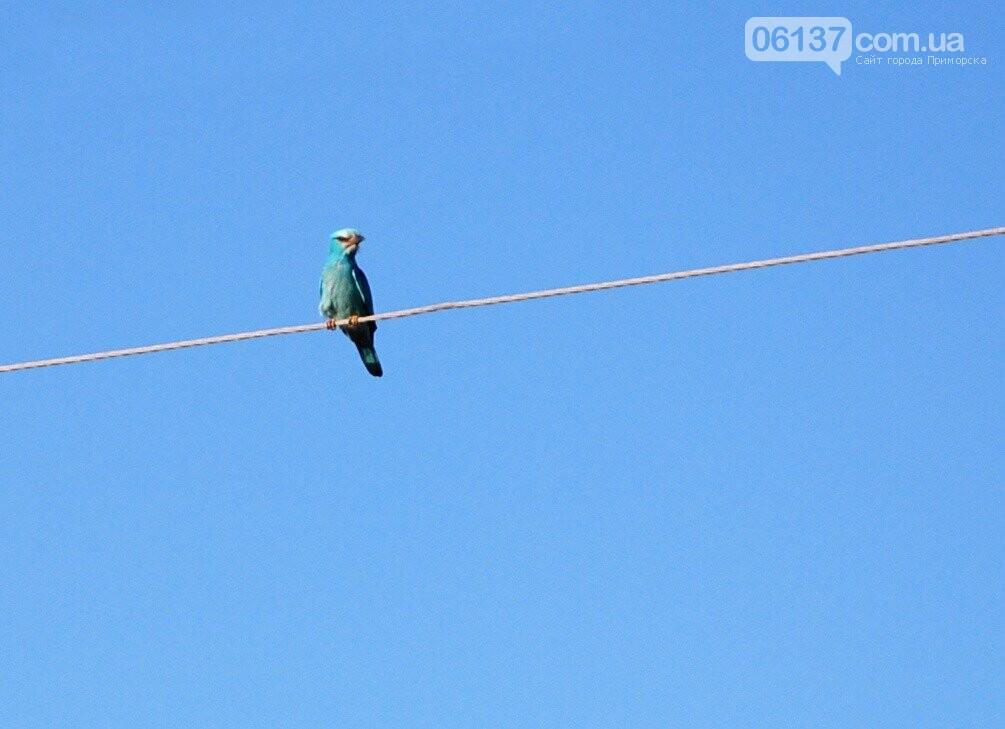 На курорт Запорожской области прилетела синяя птица, фото-1