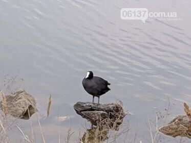На берегу Азовского моря отдыхающие увидели необычное животное . Видео, фото-5