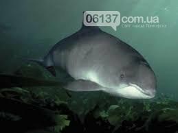 На берегу Азовского моря отдыхающие увидели необычное животное . Видео, фото-2