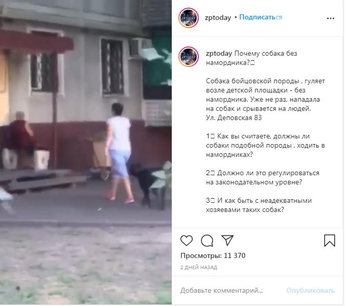 Запорожцев пугает бойцовская собака, гуляющая без намордника возле детской площадки. Видео   , фото-1