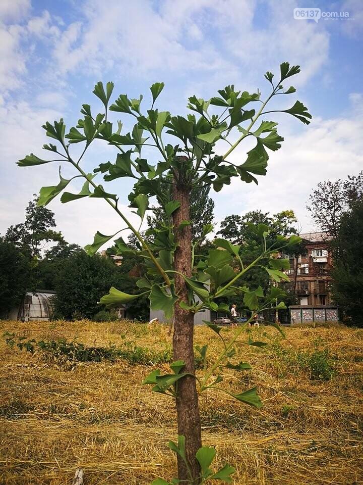 Деревья в на пустыре сквера Яланского в Запорожье вновь дали ростки. Фото, фото-1