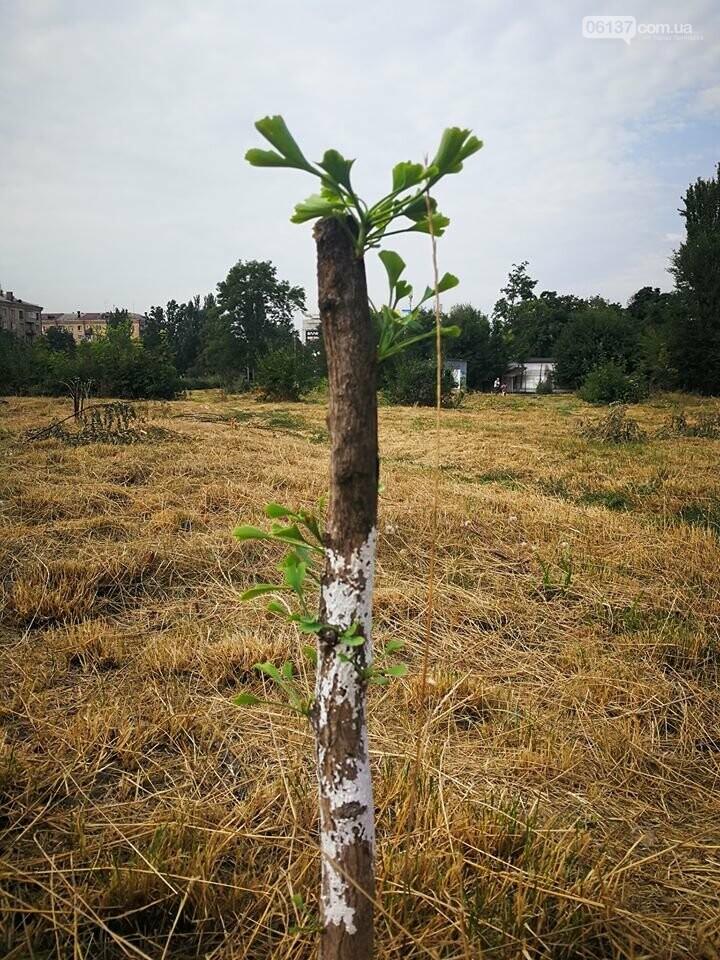 Деревья в на пустыре сквера Яланского в Запорожье вновь дали ростки. Фото, фото-3