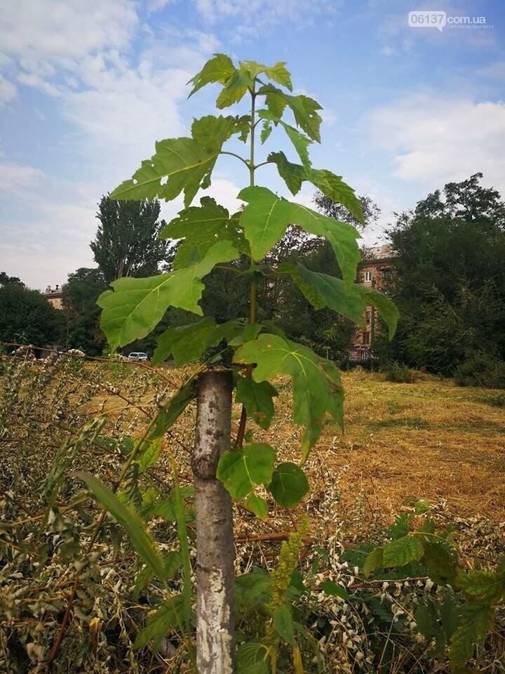 Деревья в на пустыре сквера Яланского в Запорожье вновь дали ростки. Фото, фото-4