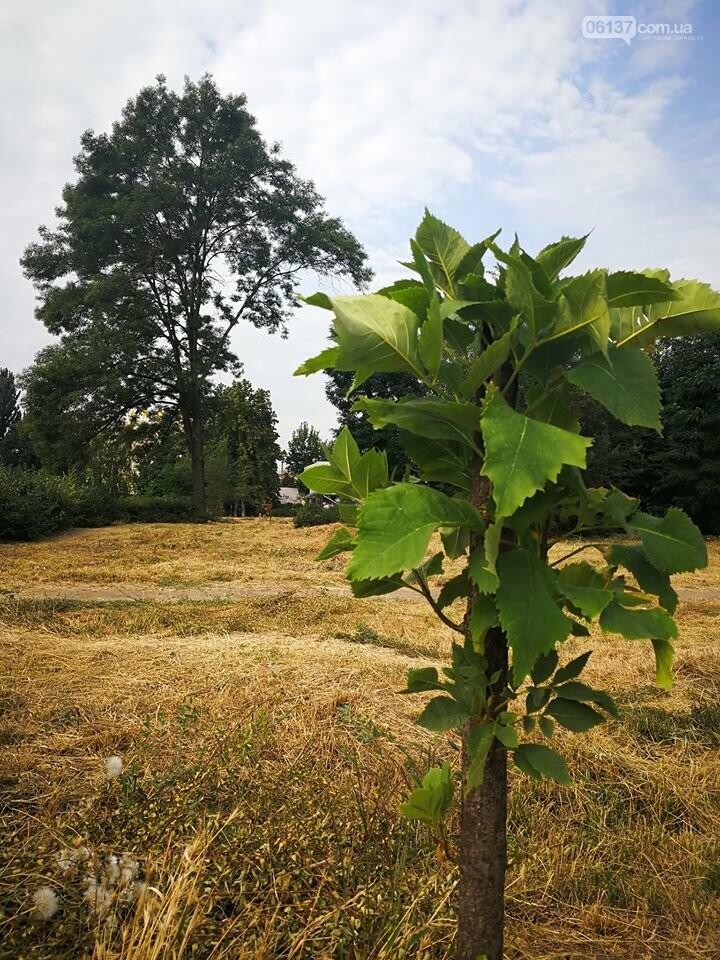 Деревья в на пустыре сквера Яланского в Запорожье вновь дали ростки. Фото, фото-5