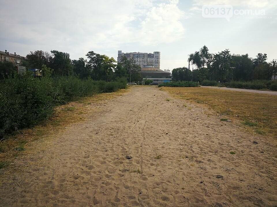 Деревья в на пустыре сквера Яланского в Запорожье вновь дали ростки. Фото, фото-6
