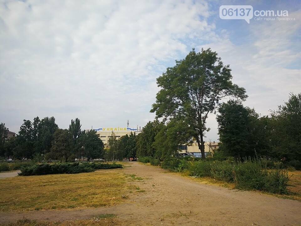 Деревья в на пустыре сквера Яланского в Запорожье вновь дали ростки. Фото, фото-7