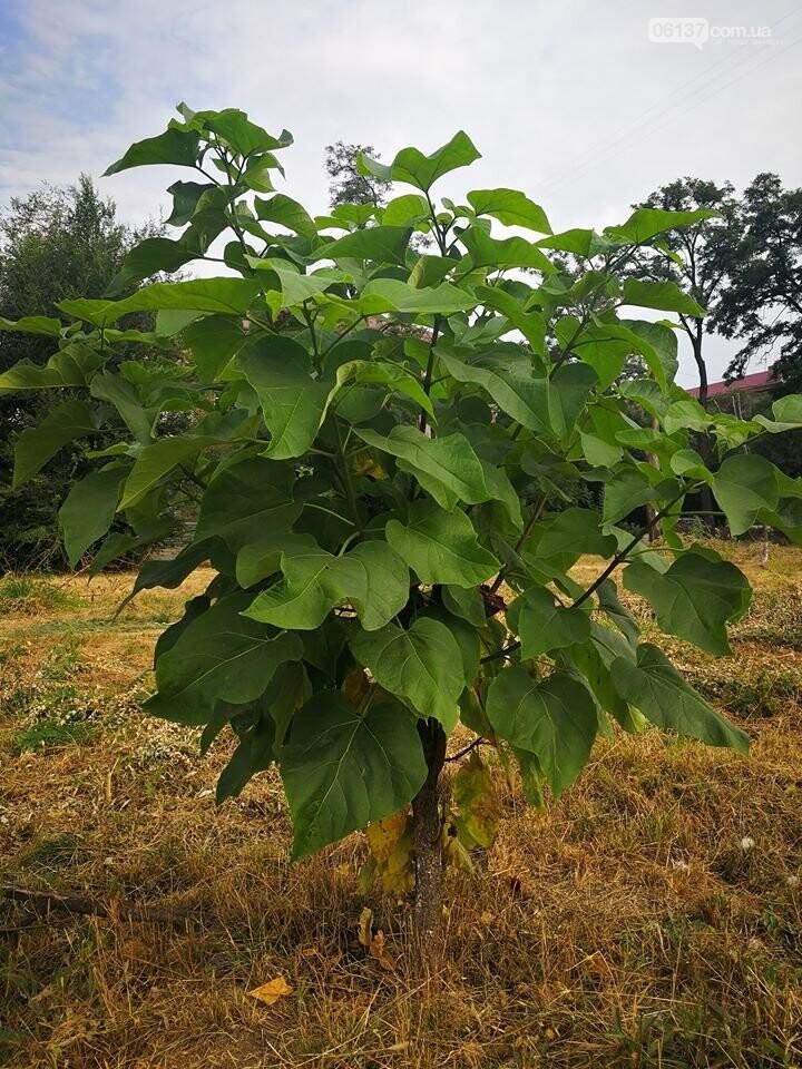 Деревья в на пустыре сквера Яланского в Запорожье вновь дали ростки. Фото, фото-9