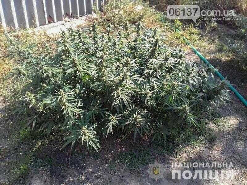 Житель Орловки Приморского района спустил на полицейских собаку, фото-1