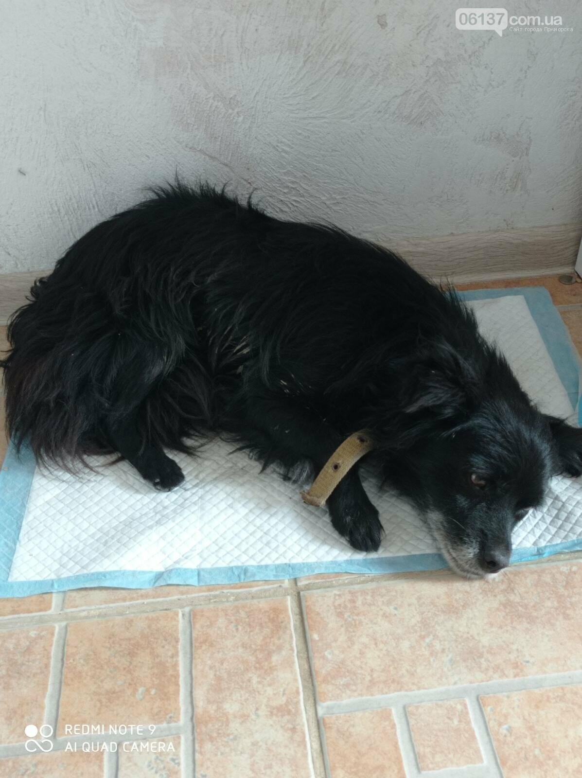 Сегодня  утром в Приморске неизвестный стрелял в собаку, фото-1