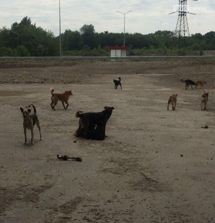 В Запорожской области массово и жестоко  расстреливают бродячих собак, фото-2