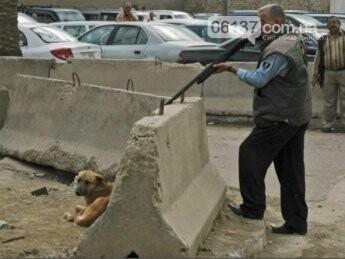 В Запорожской области массово и жестоко  расстреливают бродячих собак, фото-1