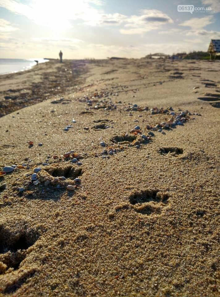 Красота ноябрьского моря в Запорожской области от заката до рассвета. Приморск. Обиточная коса , фото-15