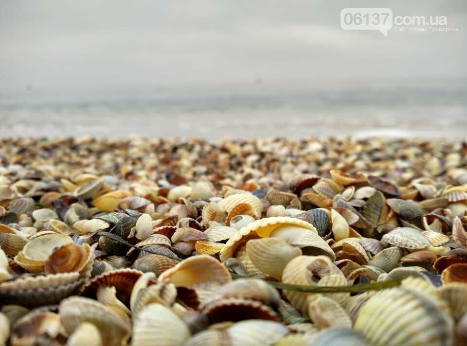 Красота ноябрьского моря в Запорожской области от заката до рассвета. Приморск. Обиточная коса , фото-19
