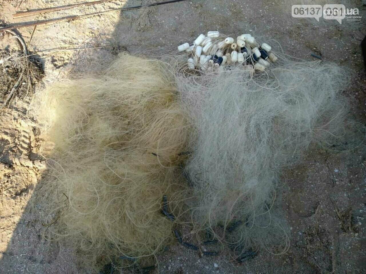 Гибель азовской хамсы на Молочном лимане, фото-7
