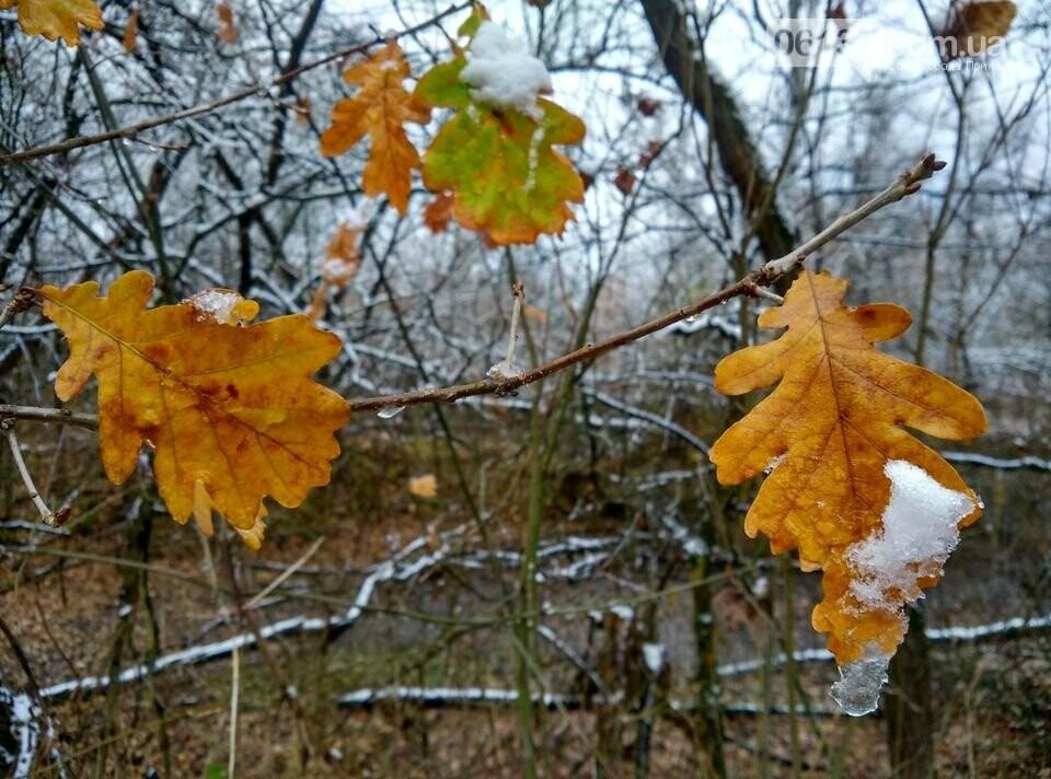 Первый снег на Хортице - вдохновение. Фото, фото-3