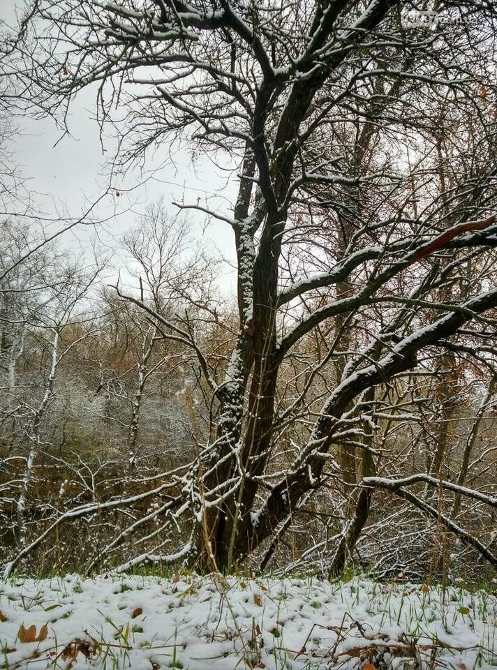 Первый снег на Хортице - вдохновение. Фото, фото-6