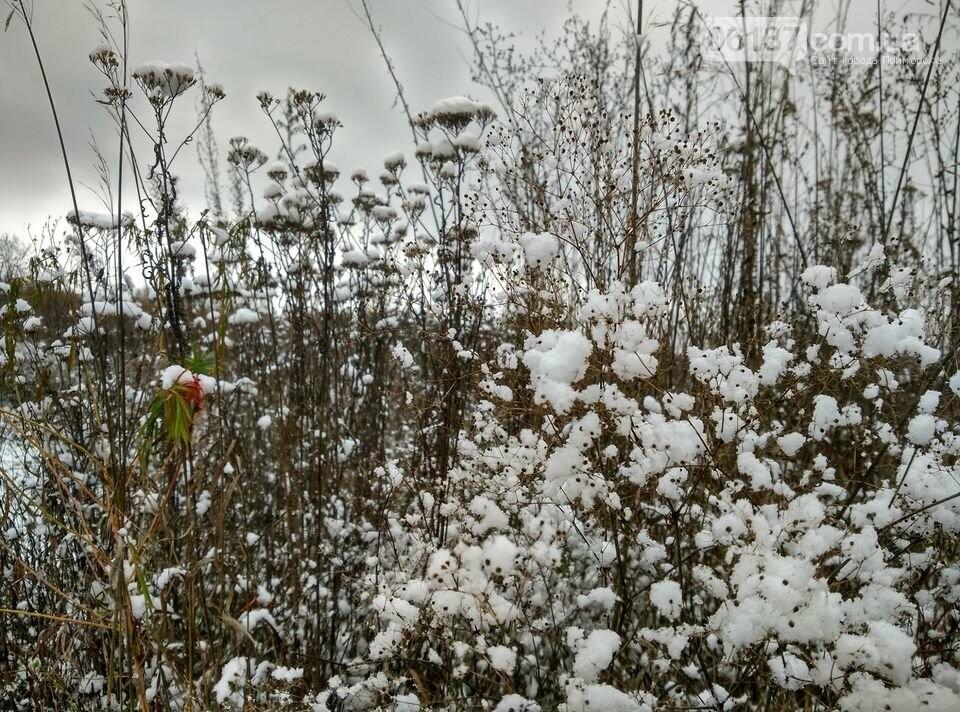 Первый снег на Хортице - вдохновение. Фото, фото-8