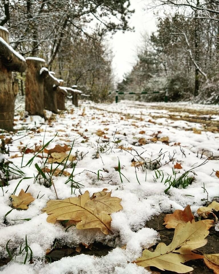 Первый снег на Хортице - вдохновение. Фото, фото-19