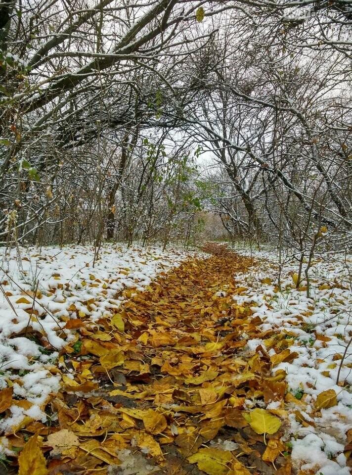 Первый снег на Хортице - вдохновение. Фото, фото-30