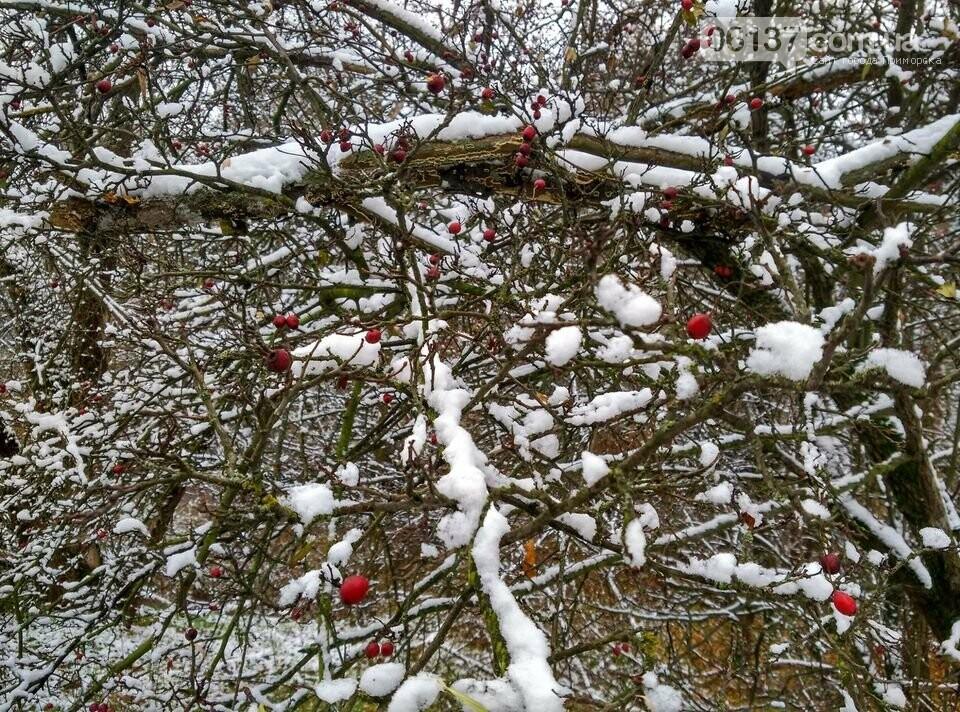 Первый снег на Хортице - вдохновение. Фото, фото-32
