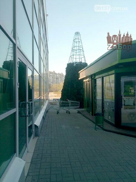 В Запорожье начали устанавливать новогодние елки. Фото, фото-1