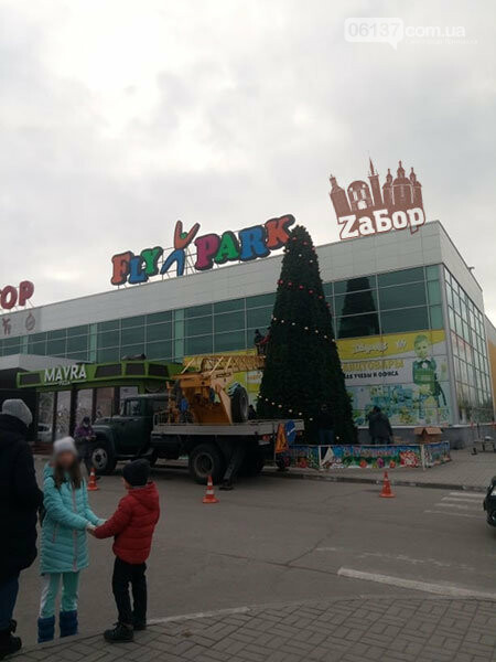 В Запорожье начали устанавливать новогодние елки. Фото, фото-2