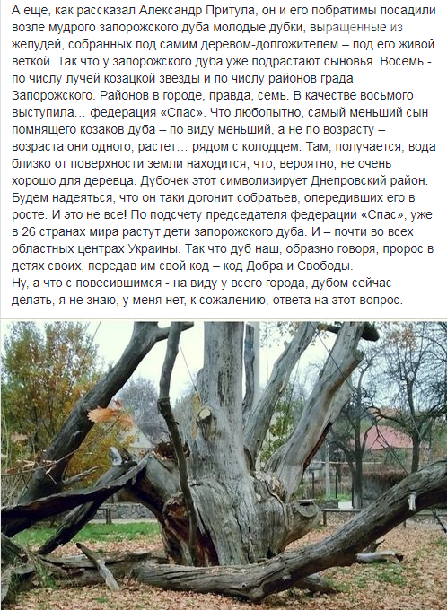 """В Запорожье """"повесился"""" легендарный дуб. Фото , фото-3"""