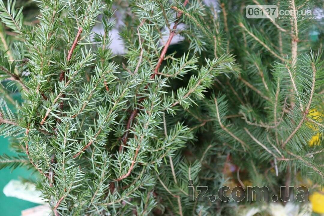 В Запорожье продают елки по 10 грн. Фото, фото-2