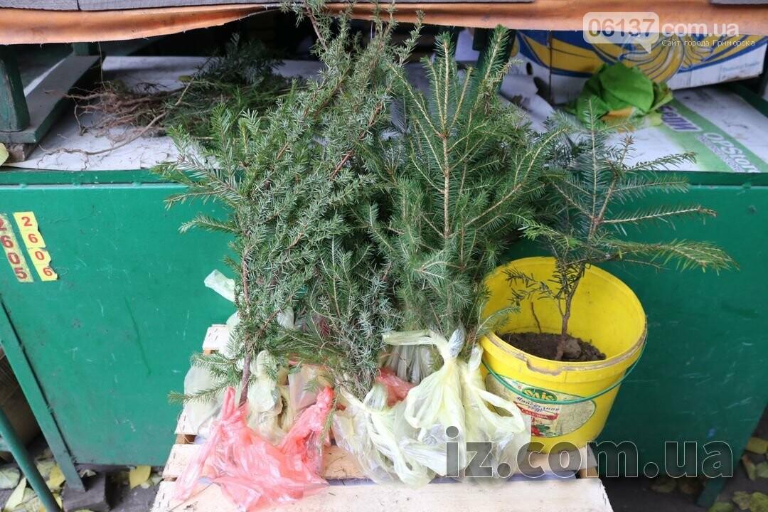 В Запорожье продают елки по 10 грн. Фото, фото-1