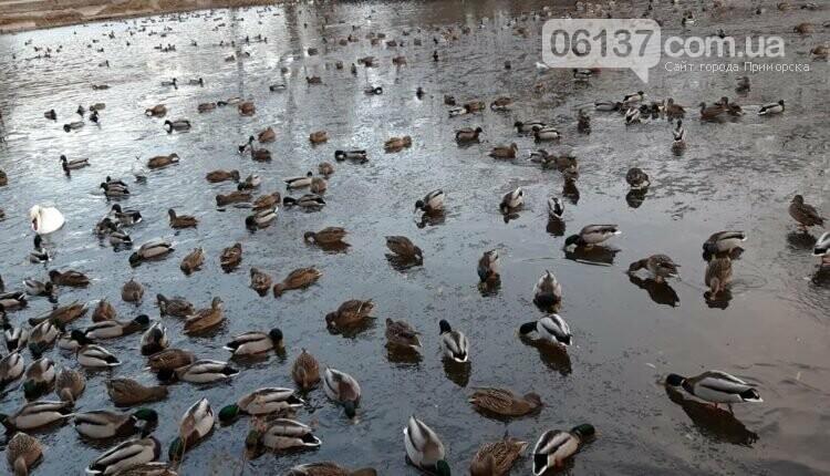 В запорожском парке нашествие птиц. Фото, фото-3
