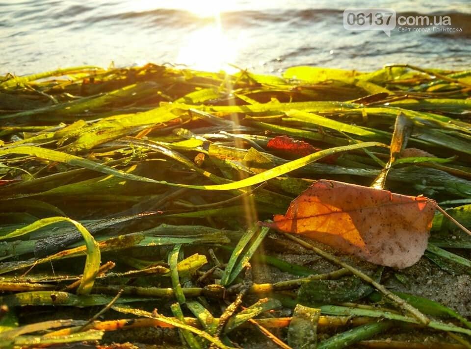 Иней, лед и солнце: живописные выходные в Запорожье. Фото , фото-8