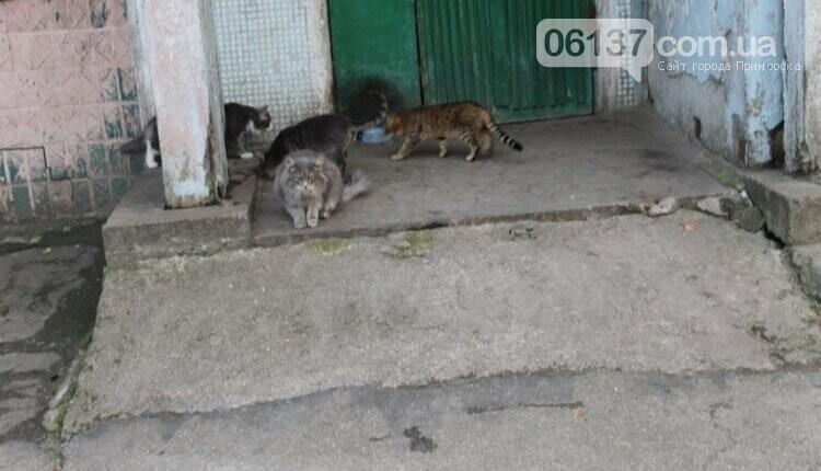 В Запорожье ОСББ хочет замуровать около 60 котов в подвалах дома. Фото/Видео, фото-1
