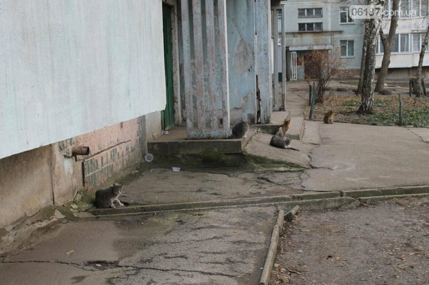 В Запорожье ОСББ хочет замуровать около 60 котов в подвалах дома. Фото/Видео, фото-4