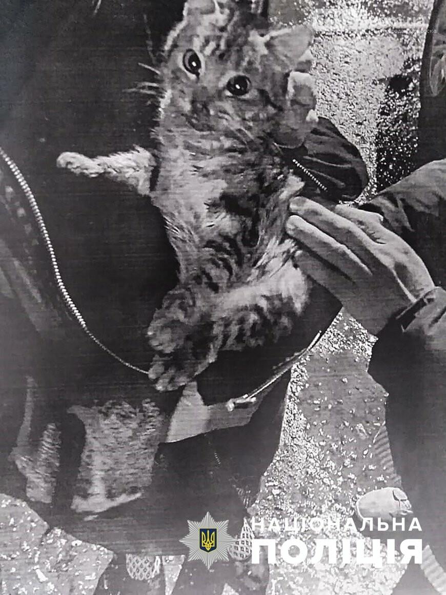 В Запорожской области на живодера, который отбирал у волонтеров животных, открыли уголовное производство. Фото, фото-1