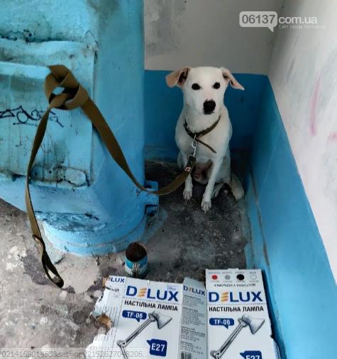 В Запорожье собаку привязали к мусоропроводу и бросили. Фото, фото-1