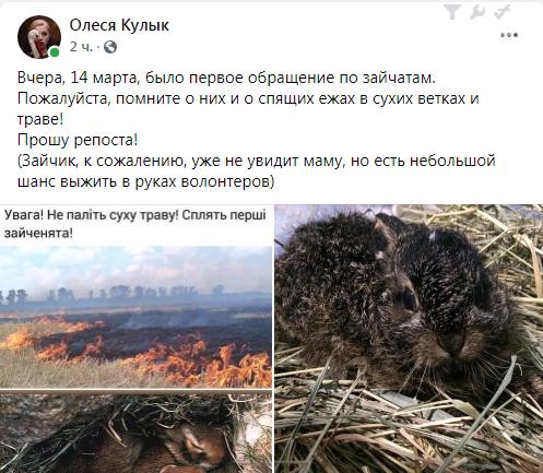 Запорожцев просят не жечь сухую траву - пощадить животных. Фото , фото-1