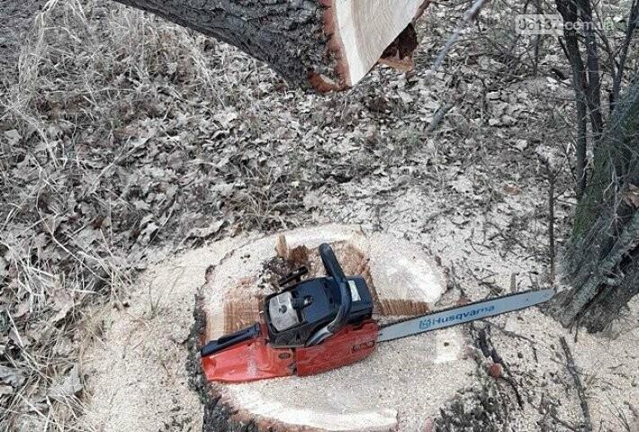 В Запорожской области черный лесоруб бросался на людей с бензопилой. Фото, фото-1
